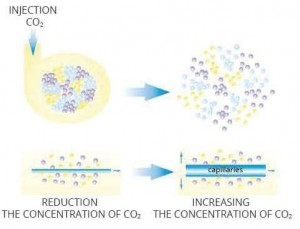 explication reduction de concentration de co2