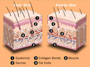 image differents types de cellulite